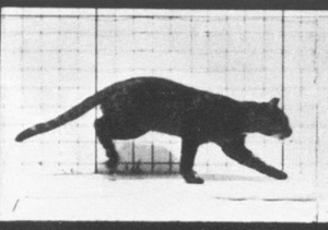 World's first cat video, 1880'somg-humor.tumblr.com: World's first cat video, 1880'somg-humor.tumblr.com