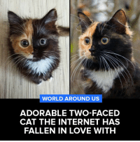 Adorable two-faced cat the internet has fallen in love with!  via Tapoos: WORLD AROUND US  ADORABLE TWO-FACED  CAT THE INTERNET HAS  FALLEN IN LOVE WITH Adorable two-faced cat the internet has fallen in love with!  via Tapoos