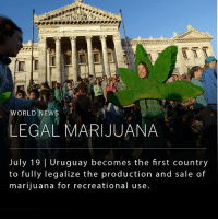 Memes, News, and Marijuana: WORLD NEWS  LEGAL MARIJUANA  July 19 Uruguay becomes the first country  to fully legalize the production and sale of  marijuana for recreational use Uruguay has become the first country in the world to legalize the production, sale and consumption of marijuana. The new law comes with a considerable list of rules and regulations intended to prevent overindulgence of the drug. All drug users must officially register with the government, and machines will scan buyers' fingerprints at every purchase.