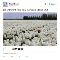 Travel, World, and MeIRL: World Travel  WORLDTravel  *  Follow  Be Different And You'll Always Stand Out  LIKES  4  5:29 AM-13 Sep 2015  L3 meirl