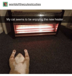 My cat does the same: worldofthecutestcuties  My cat seems to be enjoying the new heater... My cat does the same