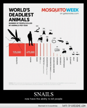 Snailshttp://omg-humor.tumblr.com: WORLD'S  DEADLIEST  ANIMALS  MOSQUITOWEEK  on gatesnotes.com  NUMBER OF PEOPLE KILLED  BY ANIMALS PER YEAR  50K  10K  10K  25K  10K  2.5K  1K  100  100  2K  500  725,000  475,000  10  10  SOURCES: WHO, erocodile-amackinte, Kasturiratne et al ido org/10.1371journal pmed.00S21, FAO Iwebcitatien arg /60spsasvol, Linnell et al Iwebcition org  SORLJOBUOI, Packer et al Idoi.org/10.1030F436927al Alessandro De Maddalena Al caloulations have wide error margins  SNAILS  now have the ability to kill people  TASTE OFAWESOME.COM  Banned in 0 countries  SHARK  WOLF  ELEPHANT  LION  - HIPPOPOTAMUS  - CROCODILE  TAPEWORM  ASCARIS ROUND WORM  FRESHWATER SNAILS (Schistosomiasis)  ASSASSIN BUG (Chagas Diseasel  TSETSE FLY ISieeping Sicknessl  DOG IRabies  SNAKE  HUMAN  MOSQUITO Snailshttp://omg-humor.tumblr.com