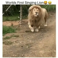 i can't stop laughing https://t.co/Npb7hB3ZcG: Worlds First Singing Lion i can't stop laughing https://t.co/Npb7hB3ZcG