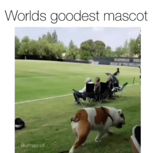 Instagram, Target, and Blank: Worlds goodest mascot  @urmascot Addie is the mascot we all need right now.via @urmascot