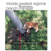 Memes, Michael Scott, and Sorry: Worlds greatest regiona  branch manager  dogsbeingbasic  Look human, I have found a stick Sorry Michael Scott you're off the team. @x__social_butterfly__x posts hilarious animal memes.