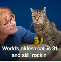 :O: World's oldest cat is 31  and still rockin' :O