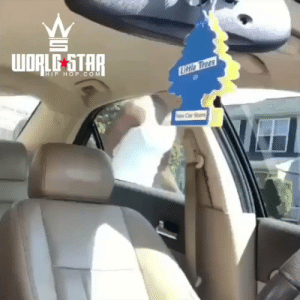 When you got leather seats in the Summer...☀️😳😂 (IG:leem1thou) https://t.co/4PDWU0b26u: WORLE STAR  HIP HOP.COM  Litio Trees When you got leather seats in the Summer...☀️😳😂 (IG:leem1thou) https://t.co/4PDWU0b26u