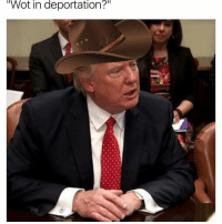 """What in tarnation 👒: """"Wot in deportation?"""" What in tarnation 👒"""