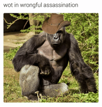 Wot In: wot in wrongful assassination