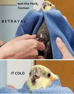 Cold, Wot, and Human: wot the heck,  human  BETRAYAL  IT COLD