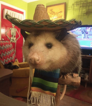 Would not be mad if I went to a Mexican restaurant and this was my waiter: Would not be mad if I went to a Mexican restaurant and this was my waiter
