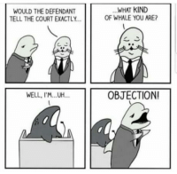 Omg, Tumblr, and Blog: WOULD THE DEFENDANT  TELL THE COURT EXACTLY  WHAT KIND  OF WHALE YOU ARE?  WELL, I'M.UH.  OBJECTION omg-humor:Pun included