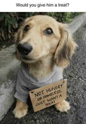 40 Hilarious Animals That Will Instantly Cure Your Bad Mood - JustViral.Net: Would you give him a treat?  NOT HUNGRY  OR HOMELESS  JUST WANTA  TREAT 40 Hilarious Animals That Will Instantly Cure Your Bad Mood - JustViral.Net