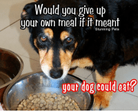 Will you? Make Sure You Like WOW Pets and stay tuned for more!: Would you give up  your own meal if it meant  Stunning Pets  your dog could eat? Will you? Make Sure You Like WOW Pets and stay tuned for more!