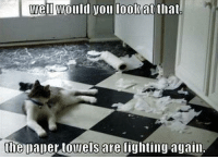 Blame avoidance dodge kitty is l33t. Explanation not needed.