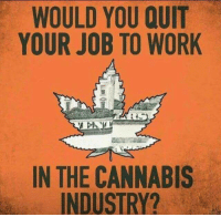 Memes, Work, and Cannabis: WOULD YOU QUIT  YOUR JOB TO WORK  IN THE CANNABIS  INDUSTRY?