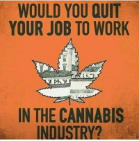 Memes, Work, and Cannabis: WOULD YOU QUIT  YOUR JOB TO WORK  IN THE CANNABIS  INDUSTRY? Would you quit? @cannasocietys420