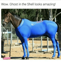 "<p>Ghost in the stable! via /r/memes <a href=""http://ift.tt/2nYn8SF"">http://ift.tt/2nYn8SF</a></p>: Wow. Ghost in the Shell looks amazing! <p>Ghost in the stable! via /r/memes <a href=""http://ift.tt/2nYn8SF"">http://ift.tt/2nYn8SF</a></p>"