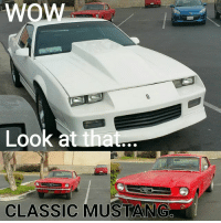 Exactly MUSTANG FTW ALWAYS 🐎🏁👍 CHEVYS=😷 Unless I say otherwise 😎 Slowmaro Wednesdays 😂😂😂💀 This would be you @classicstangs 🐸🐎 ■■■■■■■■■■■■■■■■■■■■■■■■■ FORD classic beastmode foxbody cobra SVT racecar race performance truth fordracing SALEEN ROUSH SHELBY AMERICAN AmericanMuscle GT car cars fastback stanggang stang coyote Mustang muscle terminator MACH1 BOSS302 racing: Wow  Look at  that  CLASSIC MUSTANG Exactly MUSTANG FTW ALWAYS 🐎🏁👍 CHEVYS=😷 Unless I say otherwise 😎 Slowmaro Wednesdays 😂😂😂💀 This would be you @classicstangs 🐸🐎 ■■■■■■■■■■■■■■■■■■■■■■■■■ FORD classic beastmode foxbody cobra SVT racecar race performance truth fordracing SALEEN ROUSH SHELBY AMERICAN AmericanMuscle GT car cars fastback stanggang stang coyote Mustang muscle terminator MACH1 BOSS302 racing