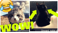 """Omg, Tumblr, and Wow: WOW!  ok at explosions <p><a href=""""https://omg-images.tumblr.com/post/168155110232/epic-cat-snapchats"""" class=""""tumblr_blog"""">omg-images</a>:</p>  <blockquote><p>Epic Cat Snapchats</p></blockquote>"""