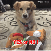 Say YES if you agree that dogs deserve a life like this!: Wow Pets  YES or NO  Photo by Shelly Bowman Say YES if you agree that dogs deserve a life like this!