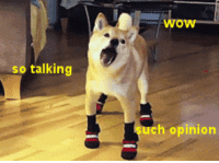 <h3>Por fin Doge en movimiento</h3>: wow  so talking  uch opinion <h3>Por fin Doge en movimiento</h3>