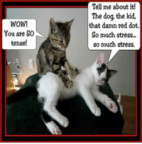 Memes, Wow, and Reds: WOW!  You are SO  tense!  Tell me about it!  The dog, the kid,  that damn red dot.  So much stress.  so much stress.