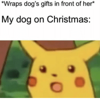 Christmas, Dogs, and Memes: *Wraps dog's gifts in front of her*  My dog on Christmas: https://t.co/9VdV73aP9Y