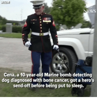Goodbye brave Warrior Cena https://t.co/13Jzs5Csby: WS  Cena, a 10-year-old Marine bomb detecting  dog diagnosed with bone cancer, got a hero's  send-off before being put to sleep. Goodbye brave Warrior Cena https://t.co/13Jzs5Csby