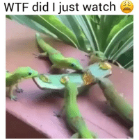 Bruh, Funny, and Did: WTF did I just watch Bruh I can't stop watching this 😭