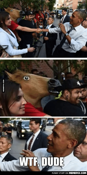 How I met your Horseomg-humor.tumblr.com: WTF, DUDE  FUNNY STUFF ON MEMEPIX.COM  MEMEPIX.COM How I met your Horseomg-humor.tumblr.com