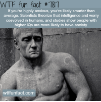 Facts, Target, and Tumblr: WTF fun fact #187  If you're highly anxious, you're likely smarter than  average. Scientists theorize that intelligence and worry  coevolved in humans, and studies show people with  igher lQs are more likely to have anxiety  wtffunfact.com lady-fairy-moth:  the-a-j-universe:  wtf-fun-factss:Anxiety - WTF fun facts   Fuck evolution. This is all his fault.  Is this why I have been stressing out since I was ten? Imagining all the scenarios and mapping out and escape route out of my home if need be ?  Hmmm