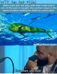 That moment when even a fish has a better love life than you.: WTF fun fact 202  Mahi-mahi fish will stay with their mate and if  one of the pair is caught, the partner stays in the  same location waiting for them to come back.  witff unfact.com  You smart, you loyal  MEMECENTER.COM That moment when even a fish has a better love life than you.