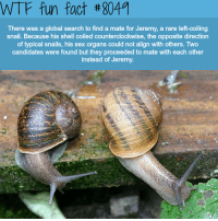 me irl: WTF fun fact #8049  There was a global search to find a mate for Jeremy, a rare left-coiling  snail. Because his shell coiled counterclockwise, the opposite direction  of typical snails, his sex organs could not align with others. Two  candidates were found but they proceeded to mate with each other  instead of Jeremy. me irl