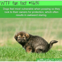 This is very true: WTF fun fact  Dogs feel most vulnerable when pooping so they  look to their owners for protection, which often  results in awkward staring  wtffunfact.com This is very true