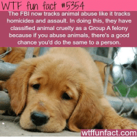 Animal: WTF fun fact th P304  The FBI now tracks animal abuse like it tracks  homicides and assault. In doing this, they have  classified animal cruelty as a Group A felony  because if you abuse animals, there's a good  chance you'd do the same to a person.  wtffunfact.com