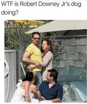 Dank, Memes, and Robert Downey Jr.: WTF is Robert Downey Jr's dog  doing? Dayum dawg! by fallen118 MORE MEMES