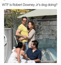 Lmaoo Reppin' that doggystyle: WTF is Robert Downey Jr's dog doing? Lmaoo Reppin' that doggystyle
