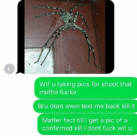 Memes, Wtf, and Fuck: Wtf u taking pics for shoot that  mutha fucka  Bru dont even text me back kill it  Matter fact till i get a pic of a  confirmed kill i dont fuck wit u. Straight up! ✌😂😂😂
