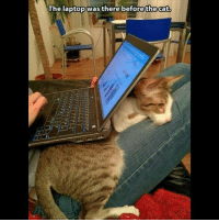 Grumpy Cat: WThe The laptop was there before the cat.