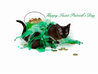 From our St Patrick Day Photo shoot.: WU From our St Patrick Day Photo shoot.
