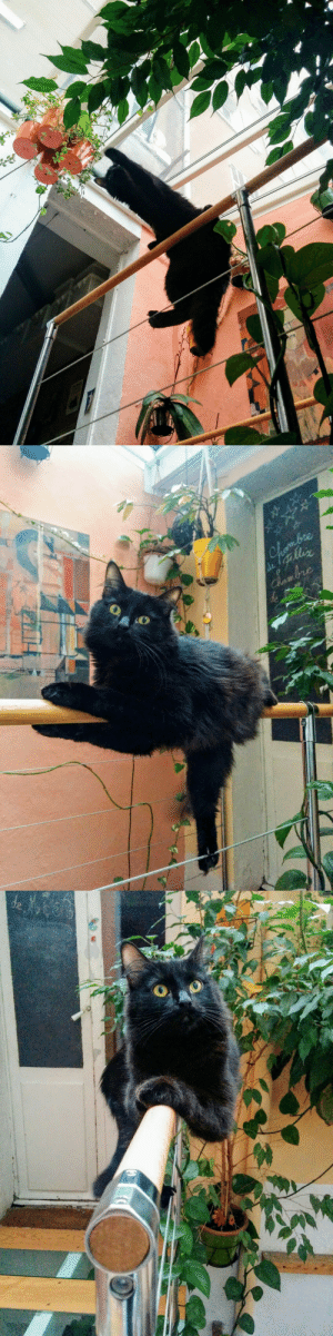 Tumblr, Blog, and France: wulfrannseyes:  [18.03.2017 - Marseille, France]Calcifer, the acrobatic cat.
