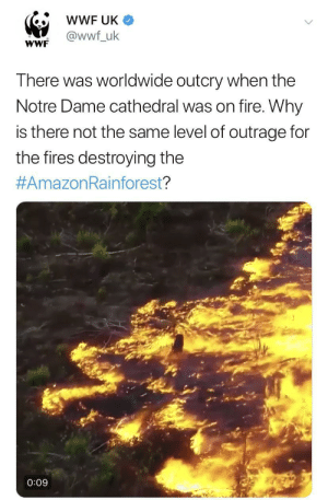 $1 billion for a church: wWF UK  @wwf_uk  wWF  There was worldwide outcry when the  Notre Dame cathedral was on fire. Why  is there not the same level of outrage for  the fires destroying the  #AmazonRainforest?  0:09 $1 billion for a church
