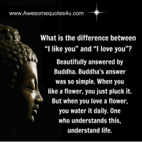 """Awesome Quotes: www.Awesomequotes4u.com  What is the difference between  """"I like you"""" and """"I love you""""?  Beautifully answered by  Buddha. Buddha's answer  was so simple. When you  like a flower, you just pluck it.  But when you love a flower,  you water it daily. One  who understands this,  understand life. Awesome Quotes"""