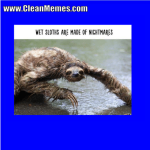 wwwCleanMemescom WET SLOTHS ARE MADE OF NIGHTMARES Clean ...