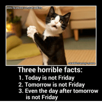 Cats, Facebook, and Facts: www.facebook.com/cat,addicts  cataddictsanony-mouse  Three horrible facts:  1. Today is not Friday  2. Tomorrow is not Friday  3. Even the day after tomorrow  is not Friday thanks to www.flickr.com/photos/52608016@N05/8541047995