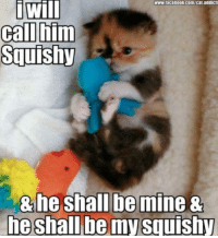-Iceprincess: www.facebook.com/cat addicts  i Will  call him  Squishy  & he shall be mine &  he shall be my Squishy -Iceprincess
