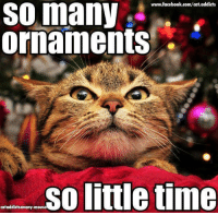 Facebook, Memes, and facebook.com: www.facebook.com/cat.addicts  SO many  ornaments .  so little time  cataddictsanony-mouse :P