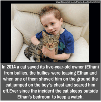ethan: www.facebook.com/themedicalfactsdotcom  In 2014 a cat saved its five-year-old owner (Ethan)  from bullies, the bullies were teasing Ethan and  when one of them shoved him on the ground the  cat jumped on the boy's chest and scared him  off Ever since the incident the cat sleeps outside  Ethan's bedroom to keep a watch.