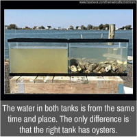 Facebook, Memes, and facebook.com: www.facebook.com/themedicalfactsdotcom  The water in both tanks is from the same  time and place. The only difference is  that the right tank has oysters.
